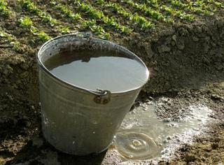 バケツに水が溜まっている画像.jpg