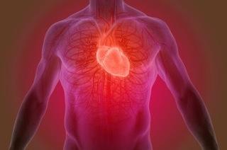 心臓と血管の画像.jpg
