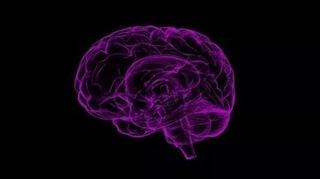 紫色の脳のイメージ画像.jpg
