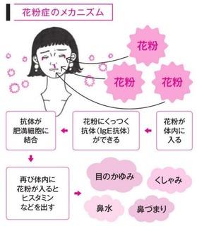 花粉症のメカニズム.jpg