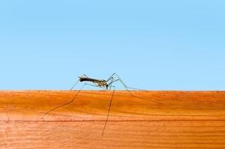 蚊が壁に止まっている画像.jpg