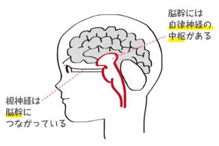 視神経の画像.png