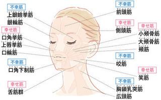顔の筋肉の画像.jpg